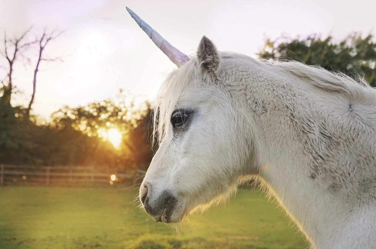 This is a photo of Simplicity Picture of Unicorns