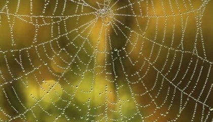 Spider Web_Medium__Comp